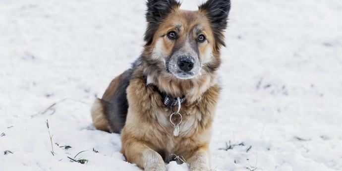 Urlaub mit Hund in Schladming-Dachstein