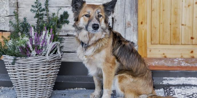 Urlaub mit Hund in Haus im Ennstal