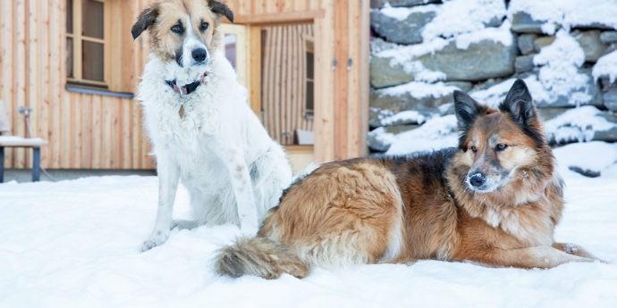Skiurlaub mit Hund in Österreich