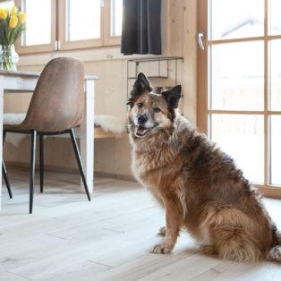 Hunde willkommen im Ferienhaus