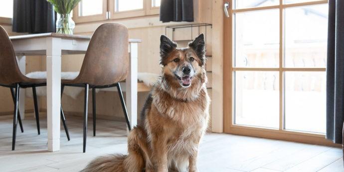 Urlaub mit Hund, Steiermark, Ferienhaus